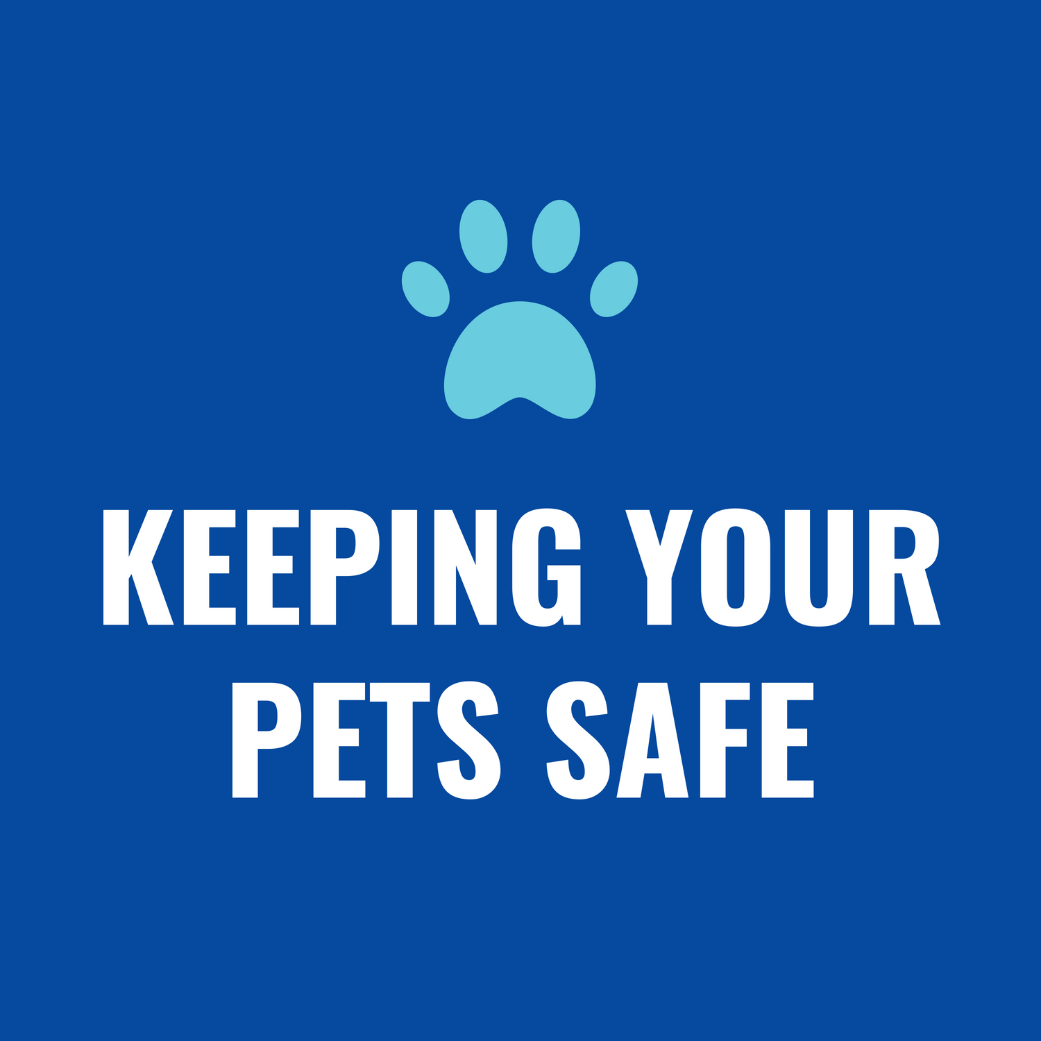 "Graphic text of ""Keeping your Pets Safe"""